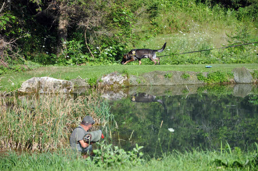 "patrol K9 tracks towards the ""bad guy"" that is hiding in a pond"